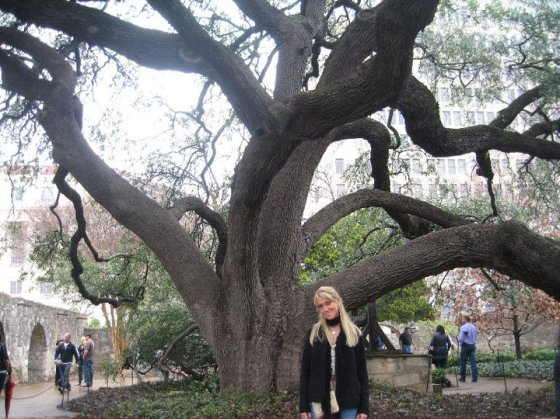 Twisty tree, San Antonio.